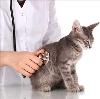 Ветеринарные клиники в Хворостянке